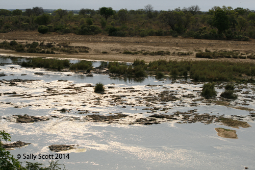 The view across the Crocodile River, as seen  from our chalet at Ngwenya Lodge